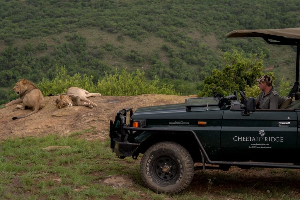 Big Cat Safaris - Cheetah Ridge Lodge
