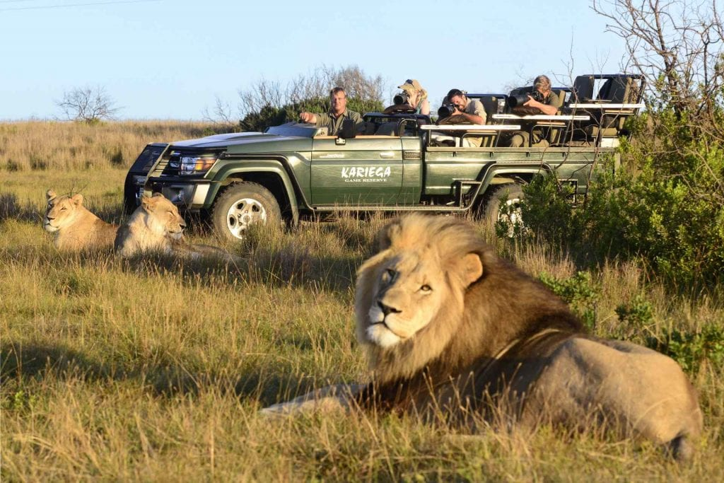 Big Cat Safaris - Kariega Main Lodge