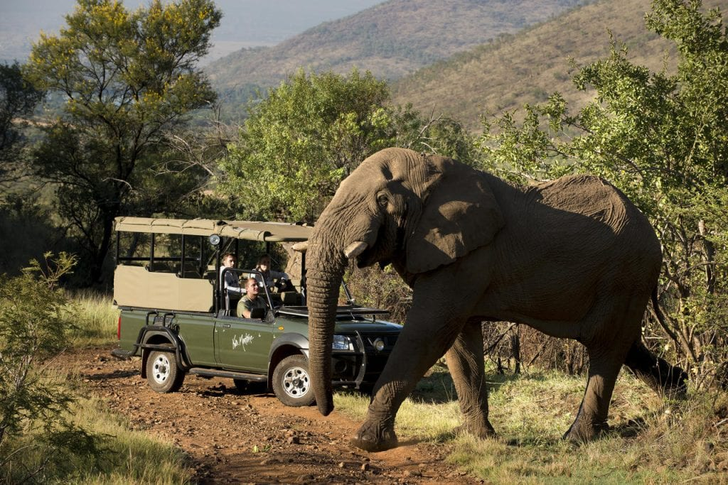 Big Cat Safaris - Kwa Maritane Lodge