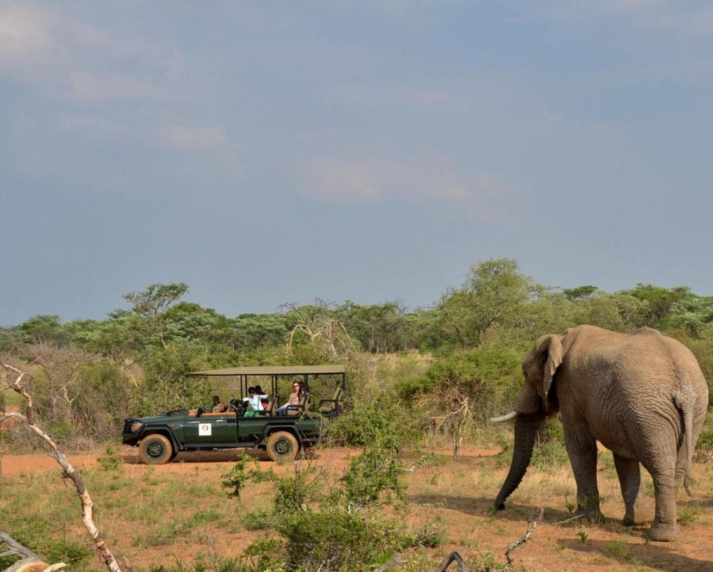 Big Cat Safaris - Mabula Game Lodge 25