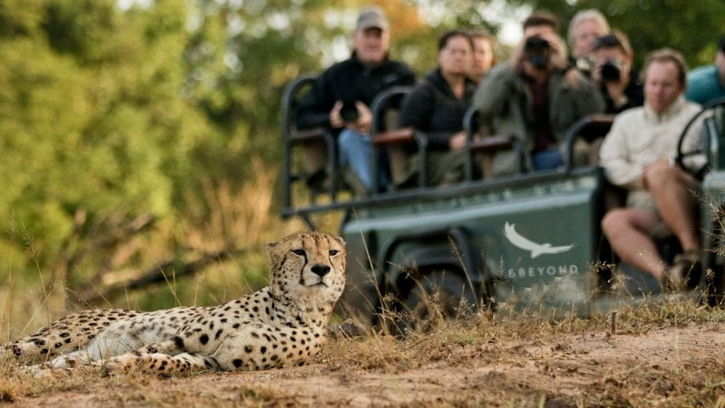 Big Cat Safaris - Phinda Forest lodge - Cheetah Phinda South Africa