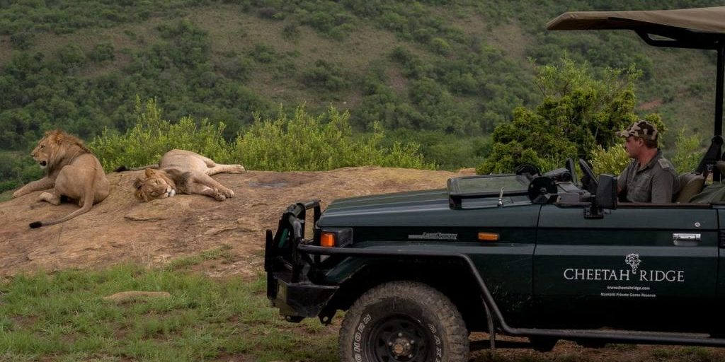 Big Cat Safaris - Cheetah Ridge Lodge